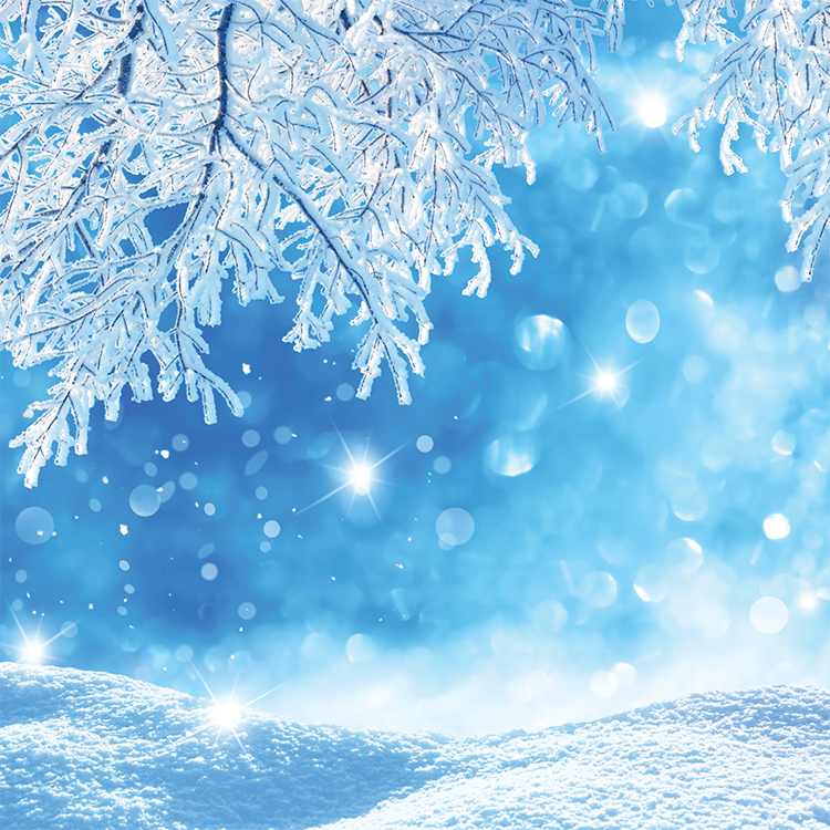 1653 - Frosty Branches Branded Christmas Card