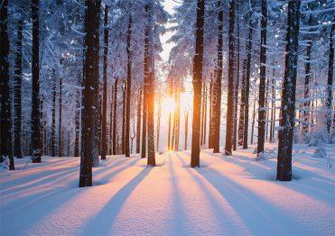 1676 - Winter Sunset Branded Christmas Card