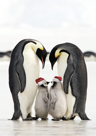 1630 - Penguin Christmas Branded Christmas Card