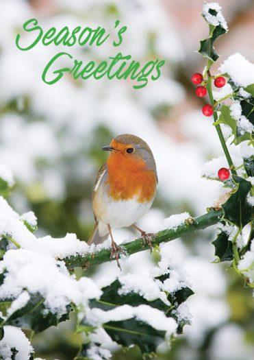1643 - Sitting Pretty Branded Christmas Card